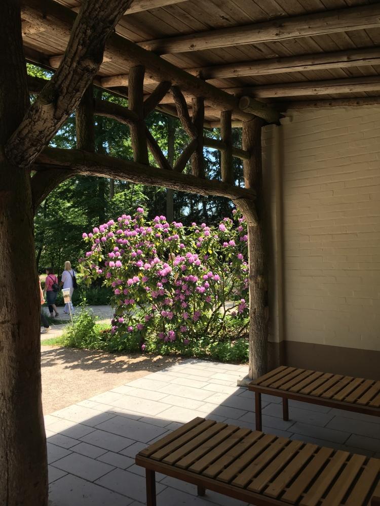 Veiw of flowering shrub in the sunshine