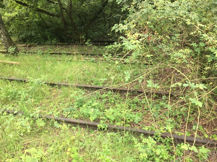 Things Helen Love, Disused railway lines partially grown over with trees and grass