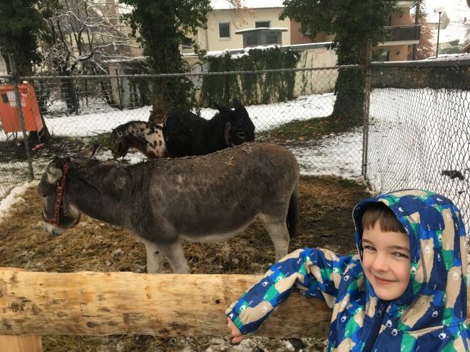 Things Helen Loves, boy smiling in front of pen of donkeys.