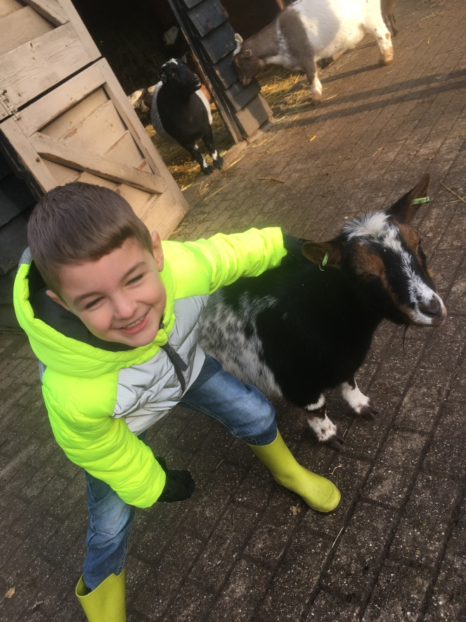 Things Helen Loves, image of boy petting goats