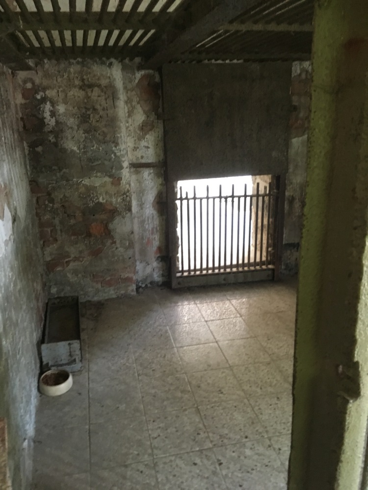 Things Helen Loves, image of interior of old bear enclosures, small space with concrete walls and floors.
