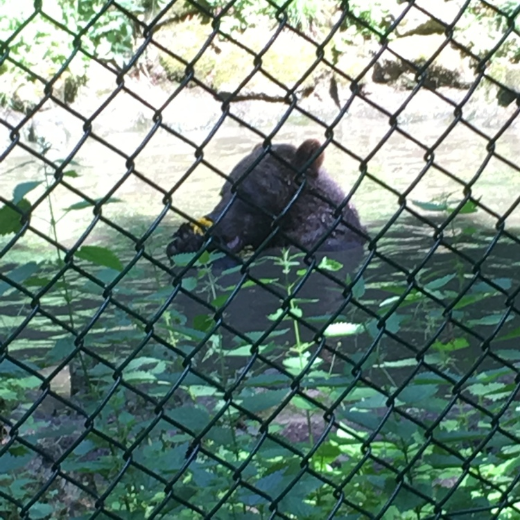 Things Helen Loves, brown bear playing in a pond.