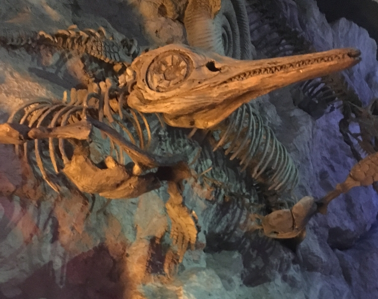 Things Helen Loves, recreated fossil of sea creatures of the past