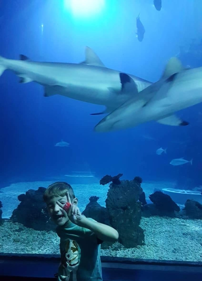 Things Helen Loves, boy in front of tank with two sharks