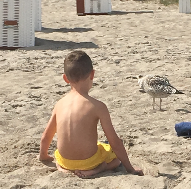 Things Helen Loves, boy sat on sand with baby seagull very close