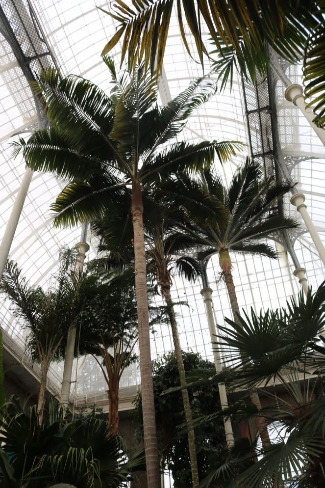 Things Helen Loves, Palms in the Temperate Palm House @ Edinburgh Botanic Gardens
