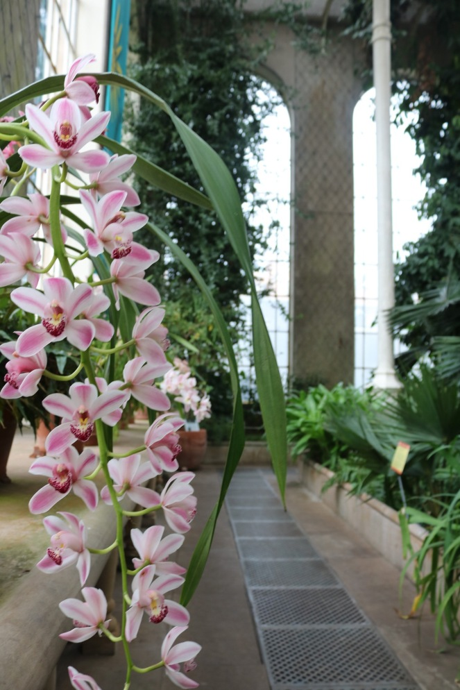 Things Helen Loves, Orchids in the Palm House