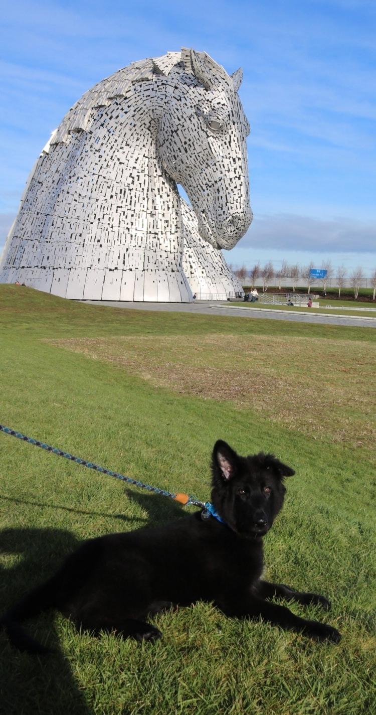 Things Helen Loves, German Shepherd Puppy in front of the Kelpies