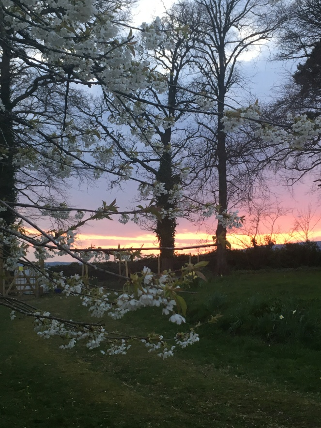 Things Helen Loves blossom with sunset to background