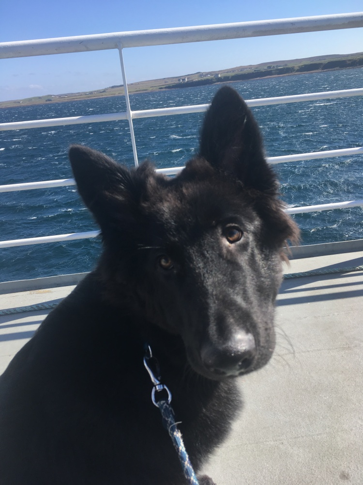 Things Helen Loves, image of black dog on a boat