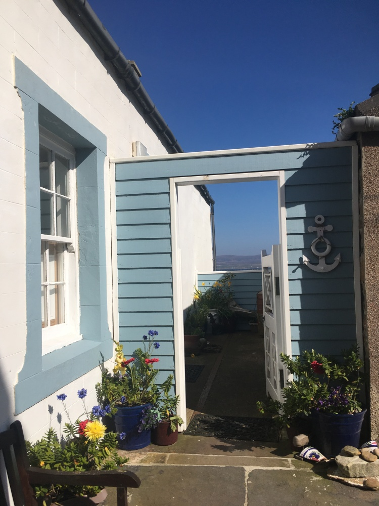 Things Helen Loves, image of garden with blue shiplap walls