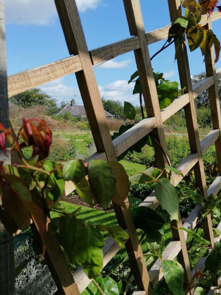 Things Helen Loves, section of garden viewed through trellis with climbing plant