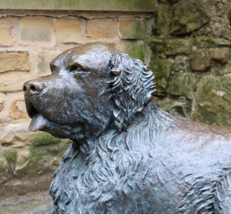 Things Helen Loves, close up shot of Bum the Dog, Edinburgh