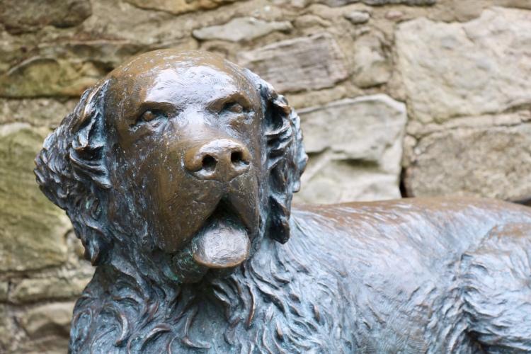 Things Helen Loves, image of Bum the Dog in Edinburgh