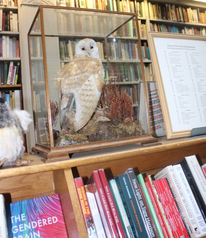 Things Helen Loves, Taxidermy owl in glass case displayed in a library setting