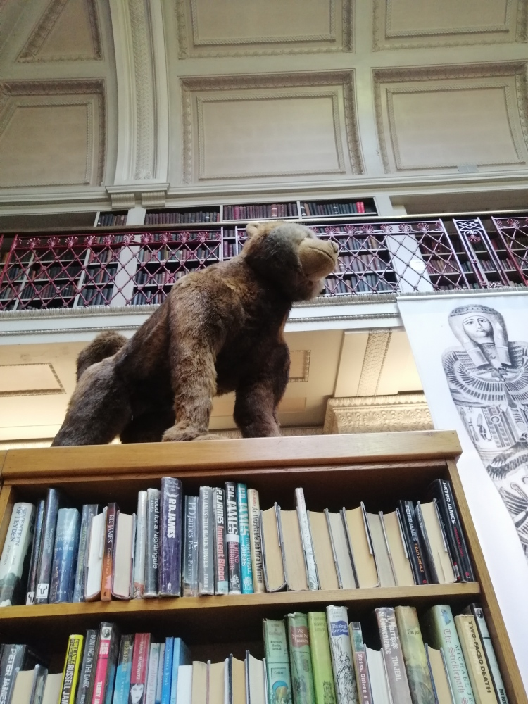 Things Helen Loves, image of taxidermy small bear on bookshelf in library