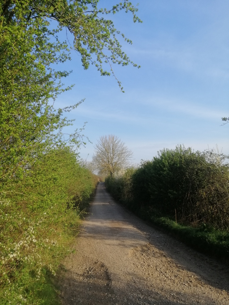 Things Helen Loves, country lane lined with greenery in the sun