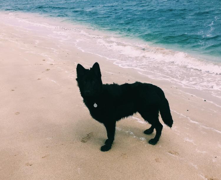 Things Helen Loves image of black dog on sea shore