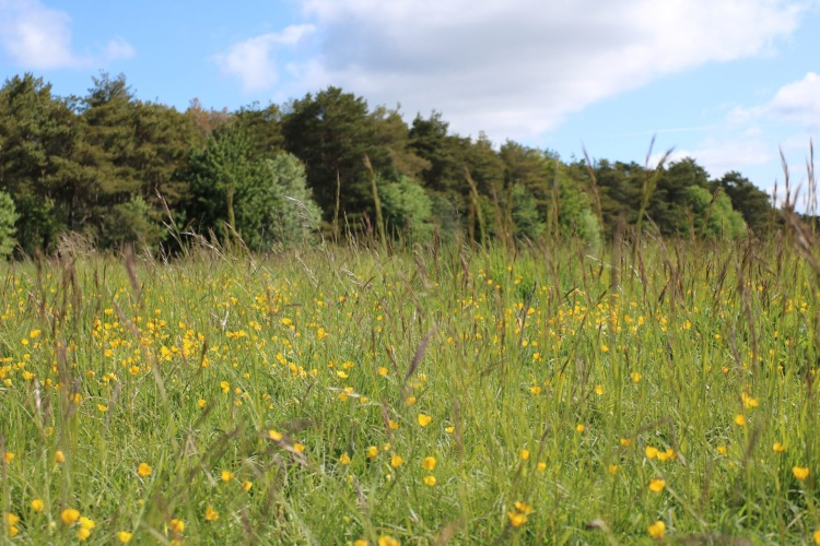Things Helen Loves, spring flowers in fields in Wiltshire