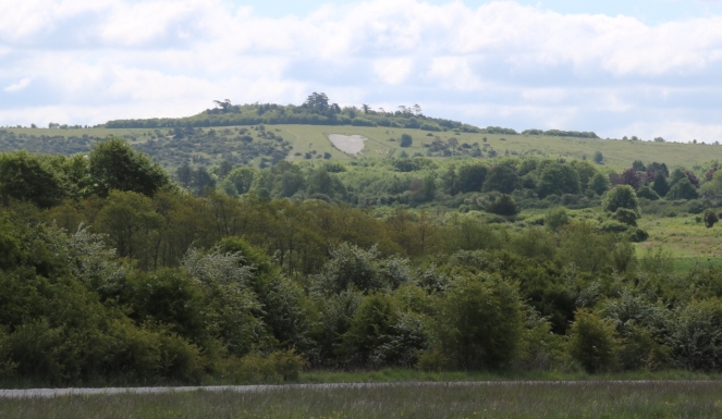 Things Helen Loves, chalk outline of a kiwi on a wiltshire hill