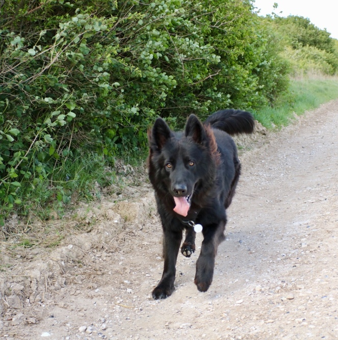 Things Helen Loves, large black dog running
