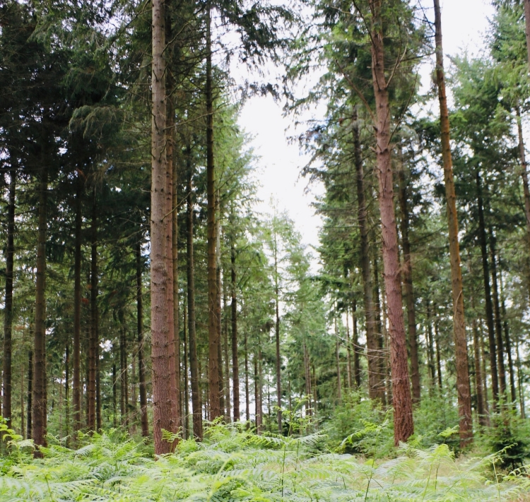 Things Helen Loves, image of woodland