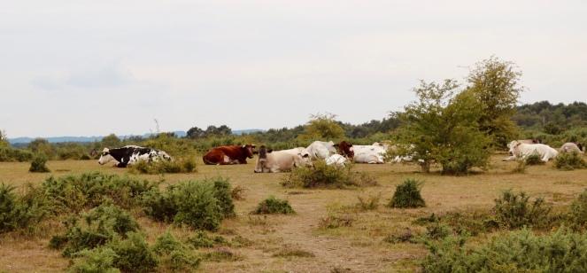 Things Helen Loves, image of cattle grazing freely on Greenham Common.