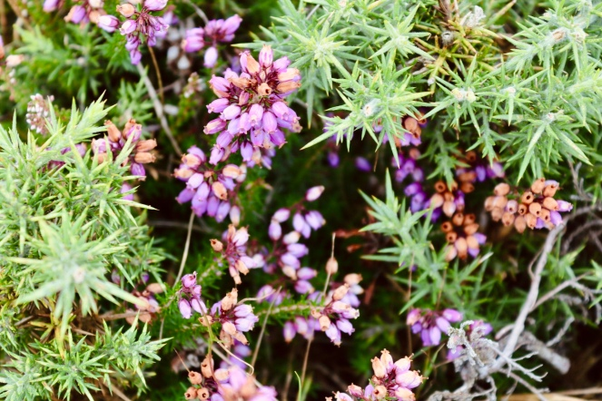 Things Helen Loves, vibrantly coloured flowers on bushes at Greenham Common