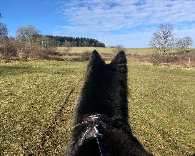 Things Helen Loves, Image of black dog looking over a field with woodland in the distance and clouds overhead.