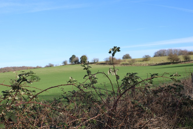 Things Helen Loves image of fields with trees in the background, and close up of hedgerow in the foreground. Blue sky overhead.