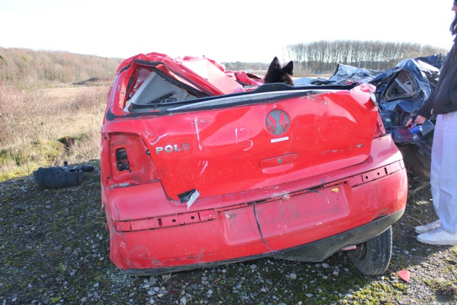 Things Helen Loves image of red scrap car from behind with dog visable in front seat.