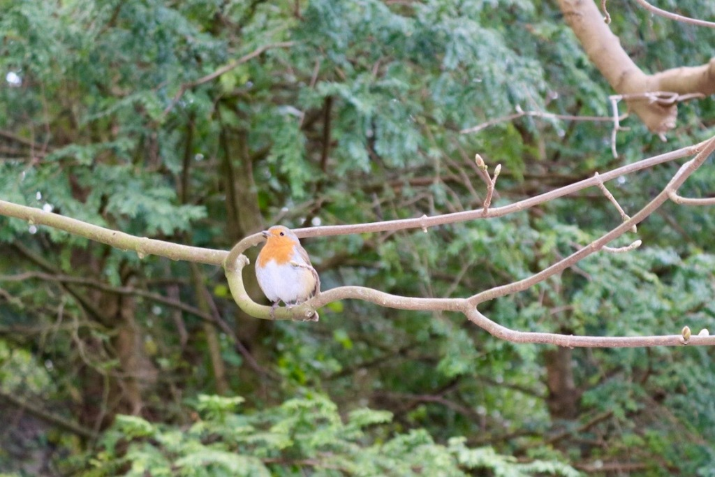 Things Helen Loves, image of a Robin sitting on a tree branch